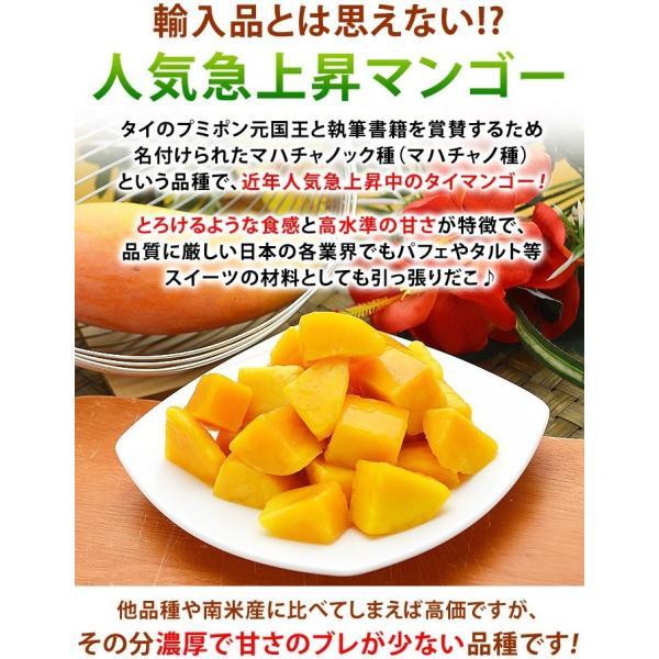 マンゴー 冷凍マンゴー 500g カット済み 完熟マンゴー 冷凍フルーツ|kamasho|03