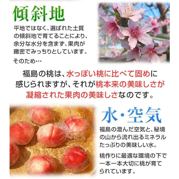 8月下旬頃発送分 桃 ギフト フルーツ 福島 予約 白桃系品種 特秀品 1.8kg 5から7玉入 1箱 もも モモ 果物 送料無料 8月17日以降 収穫次第発送|kamasho|08