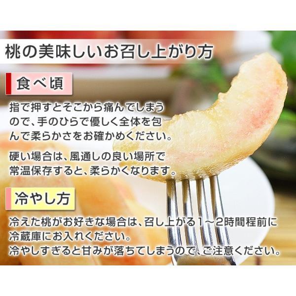 8月下旬頃発送分 桃 ギフト フルーツ 福島 予約 白桃系品種 特秀品 1.8kg 5から7玉入 1箱 もも モモ 果物 送料無料 8月17日以降 収穫次第発送|kamasho|10