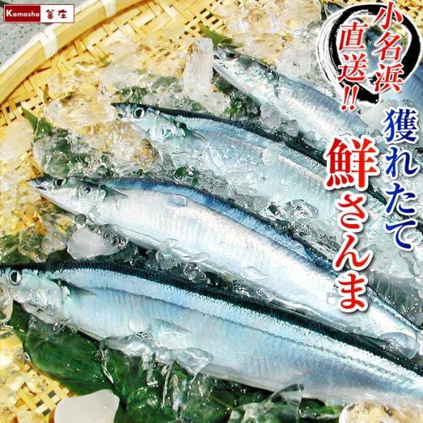 さんま サンマ 秋刀魚 15尾入 1尾あたり約120〜140g 冷蔵 発送時期は9月末〜11月頃 (他商品と同梱不可)|kamasho