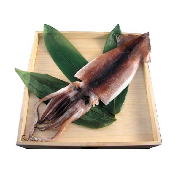 いか 一夜干し 干物(1枚)国産 無添加 熱海 釜鶴 ひもの