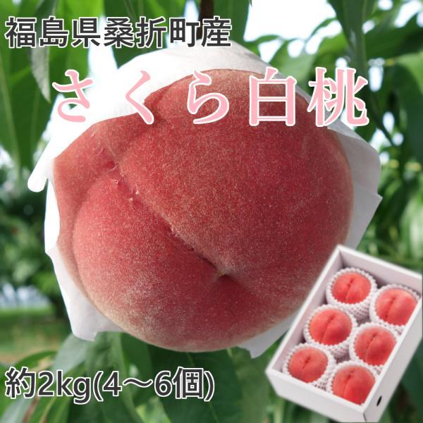 桃 福島県桑折町産 さくら白桃 ギフト品 約2kg(4〜6個) 農家直送 ふくしまプライド。体感キャンペーン(果物/野菜)|kameokakajuen
