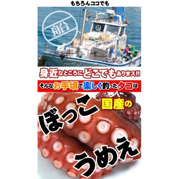 タコ釣り直行!スタッフ厳選!オクトパスハンターセット kameya-ec1 05
