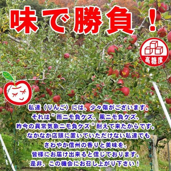 りんご「ふじ」 家庭用訳あり サンふじ キズありリンゴ約5kg 12〜20玉 信州 長野産林檎 快福りんご 【他商品との同梱不可】|kameya|05