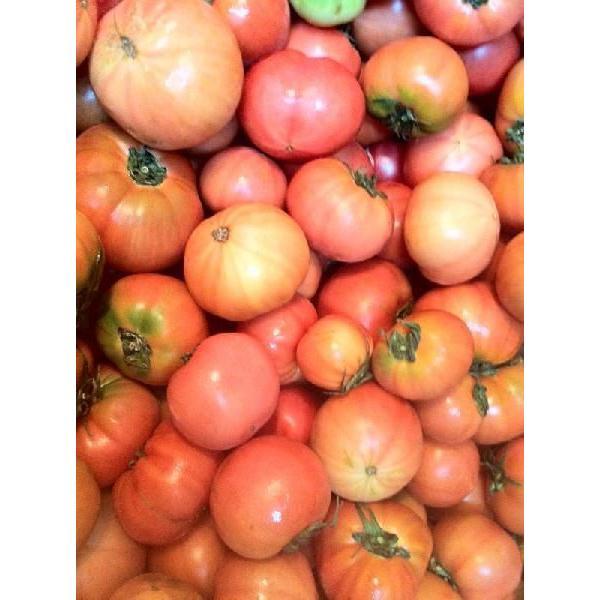 トマト6kg 和歌山産 わけあり 訳あり ワケあり 完熟 昔なつかしい味のトマト 土で育てた桃太郎トマト