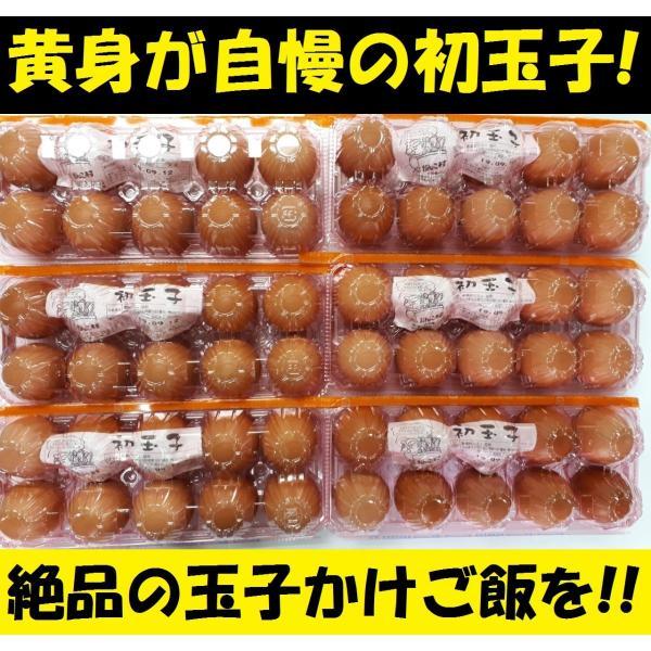 父の日・お中元・お歳暮(濃厚)(送料無料)黄身が自慢の初玉子(玉子 たまご タマゴ 卵 鶏卵)(10コ入り×6パック=60コ)