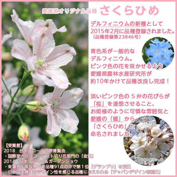 接触冷感さくらひめマスク大人用(愛媛県/日本製)洗える1枚入|kanbankobo|06