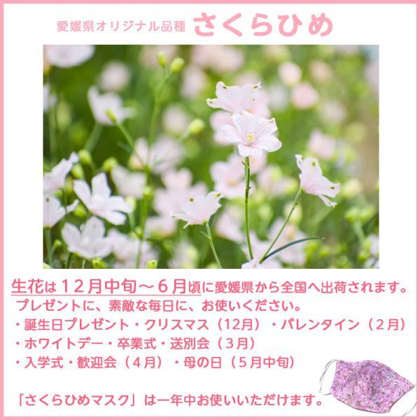 接触冷感さくらひめマスク大人用(愛媛県/日本製)洗える1枚入|kanbankobo|07