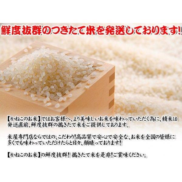 お米 29年度 秋田県産 あきたこまち 20kg (5kgx4袋)|kanekokome|06