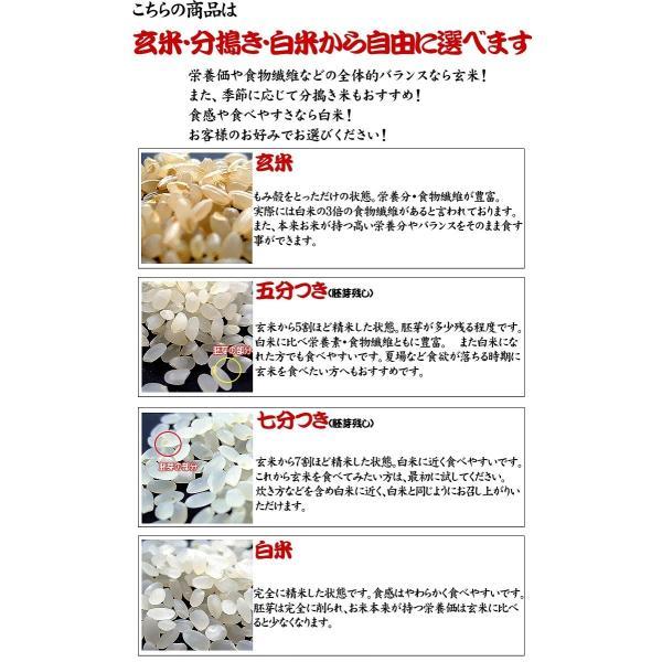 新米 お米 29年度(2017) 千葉県産 こしひかり 10kg (5kgx2袋) ※五分搗き 七分搗き 白米 選択可|kanekokome|03