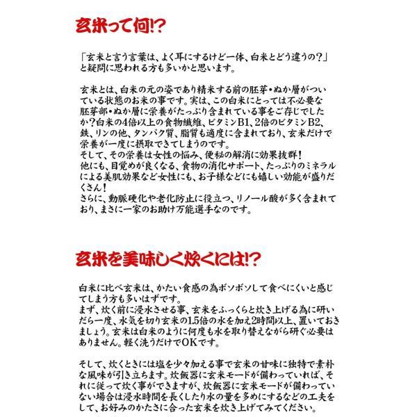 米 お米 20kg (5kgx4袋) 千葉県産 こしひかり 玄米 選別調整済み kanekokome 03