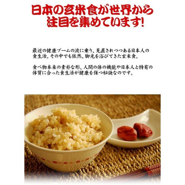 米 お米 20kg (5kgx4袋) 千葉県産 こしひかり 玄米 選別調整済み kanekokome 04