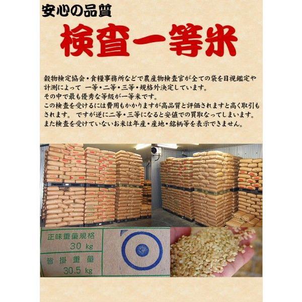 米 お米 20kg (5kgx4袋) 千葉県産 こしひかり 玄米 選別調整済み kanekokome 05