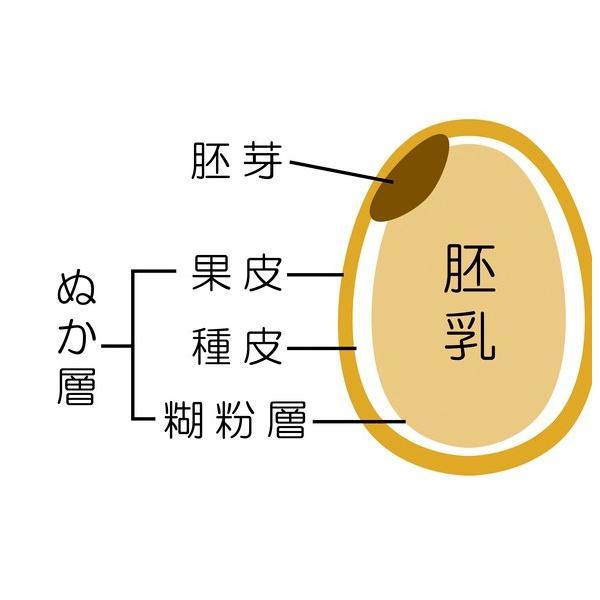 米 お米 10kg (5kgx2袋) 千葉県産 胚芽米 コシヒカリ 熨斗紙 名入れ ギフト対応|kanekokome|04
