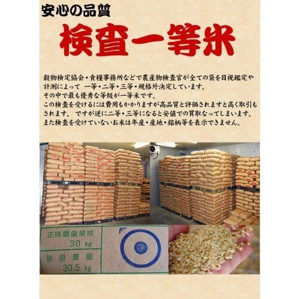 ポイント消化 真空包装 送料無料 新米 お米 1kg 千葉県産 ミルキークイーン 玄米 選別調整済み 日時指定対応不可|kanekokome|05
