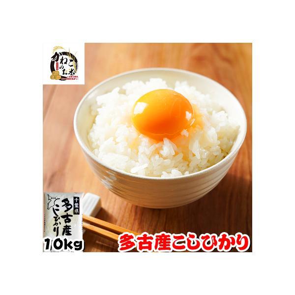 米 お米 10kg (5kgx2袋) 千葉県 多古産 こしひかり|kanekokome