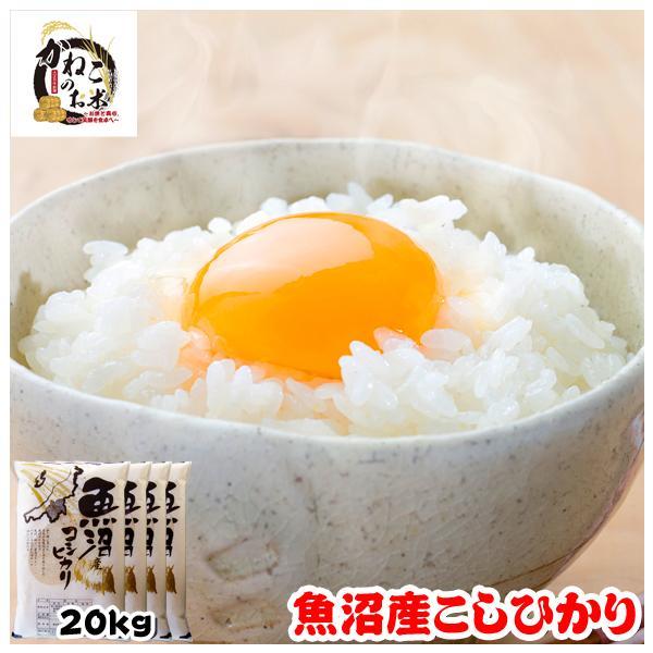 米 お米 20kg (5kgx4袋) 新潟県 魚沼産 こしひかり|kanekokome