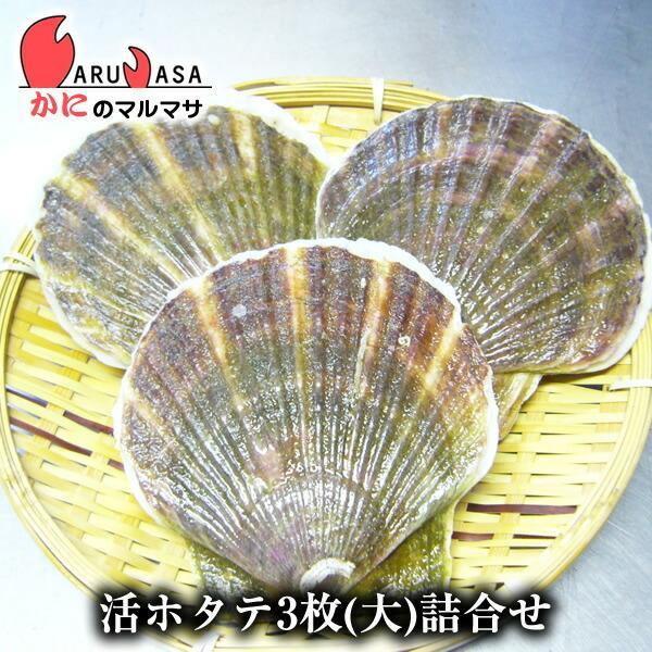 活ホタテ貝 大 3枚セット [あすつく関西]  北海道産 殻付きほたて お取り寄せ ギフト お土産 通販