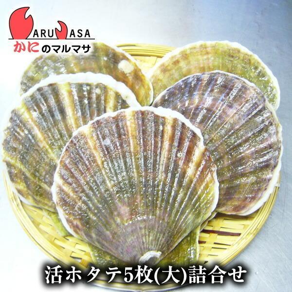 活ホタテ貝 大 5枚セット [あすつく関西] 北海道産 殻付きほたて お取り寄せ ギフト お土産 通販