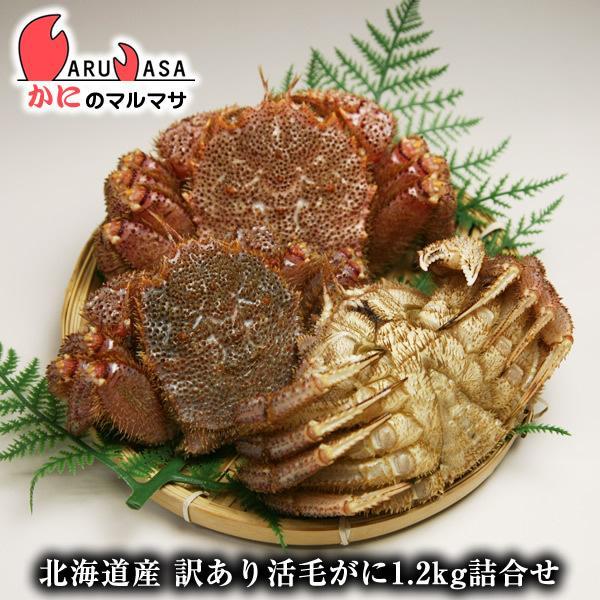 訳あり 活毛がに 1.2kgセット [あすつく関西] 北海道産 毛ガニ お取り寄せ 足折れ 規格外 通販