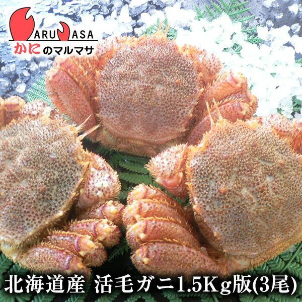 活毛ガニ 1.5kg詰め 3尾セット 北海道産 極上毛がに お取り寄せ ギフト お土産 通販