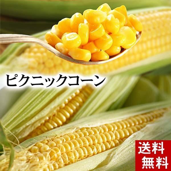 (送料無料)とうもろこし ピクニックコーン 11〜13本入り 小型だけど極甘トウモロコシ 北海道産スイートコーン 生とうきびお取り寄せ
