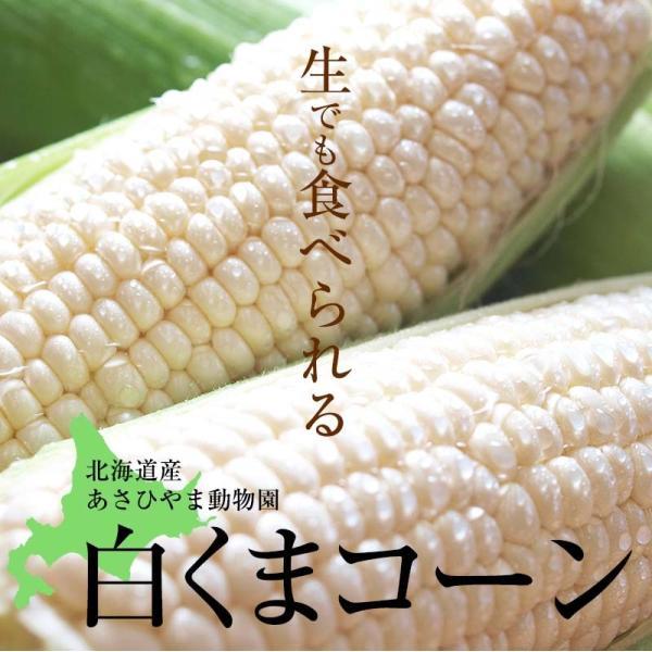 (送料無料)白いとうもろこし 白くまコーン 10本入り 生食 北海道産スイートコーン 朝もぎ生とうきびお取り寄せ|kanitaro|04