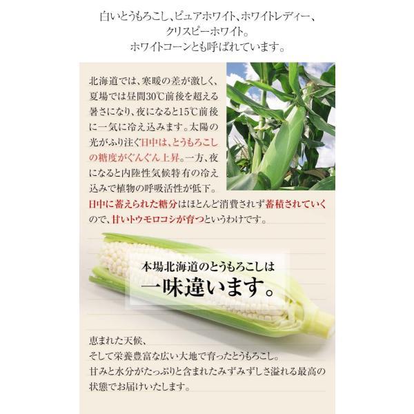(送料無料)白いとうもろこし 白くまコーン 10本入り 生食 北海道産スイートコーン 朝もぎ生とうきびお取り寄せ|kanitaro|06