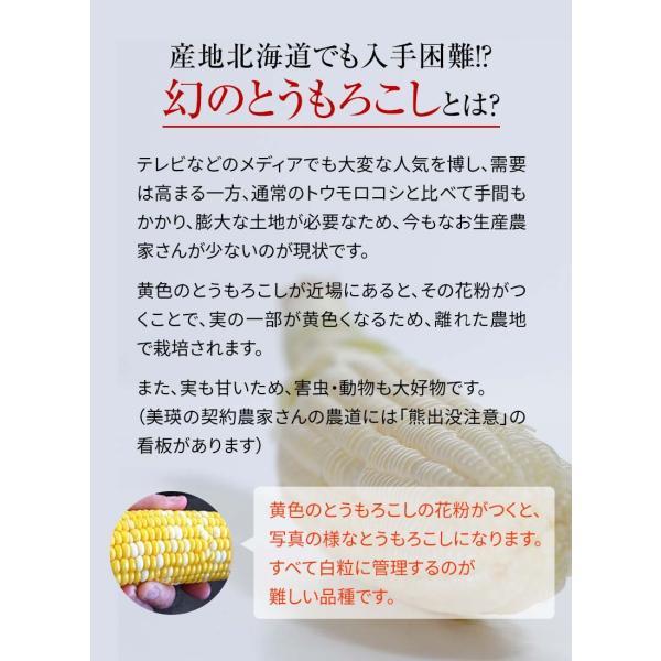 (送料無料)白いとうもろこし 白くまコーン 10本入り 生食 北海道産スイートコーン 朝もぎ生とうきびお取り寄せ|kanitaro|07