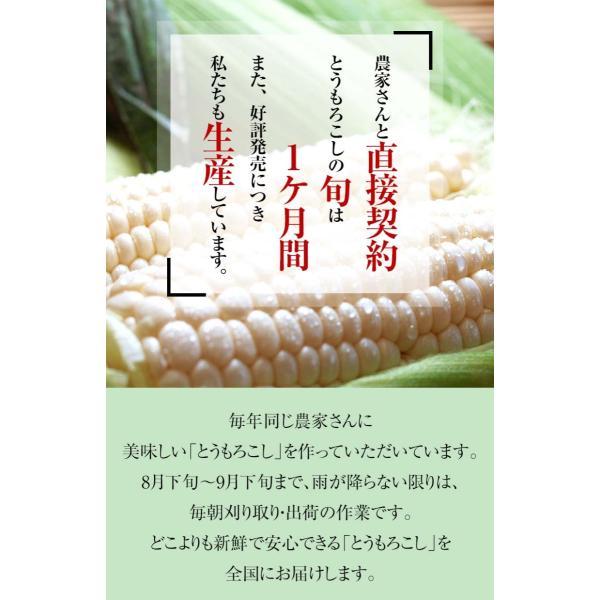 (送料無料)白いとうもろこし 白くまコーン 10本入り 生食 北海道産スイートコーン 朝もぎ生とうきびお取り寄せ|kanitaro|08