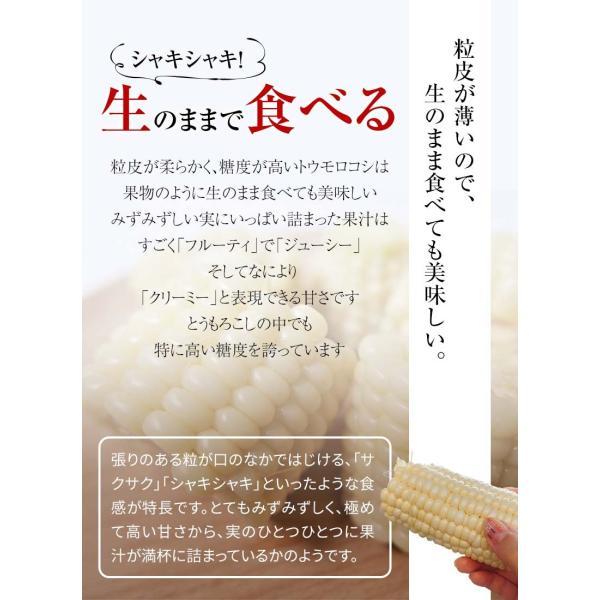 (送料無料)白いとうもろこし 白くまコーン 10本入り 生食 北海道産スイートコーン 朝もぎ生とうきびお取り寄せ|kanitaro|09