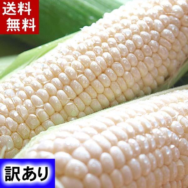 【訳あり】(送料無料)北海道産白いとうもろこし 旭山動物園白くまコーン 10〜13本入り(北海道スイートコーン) フルーツのような白いトウモロコシ|kanitaro