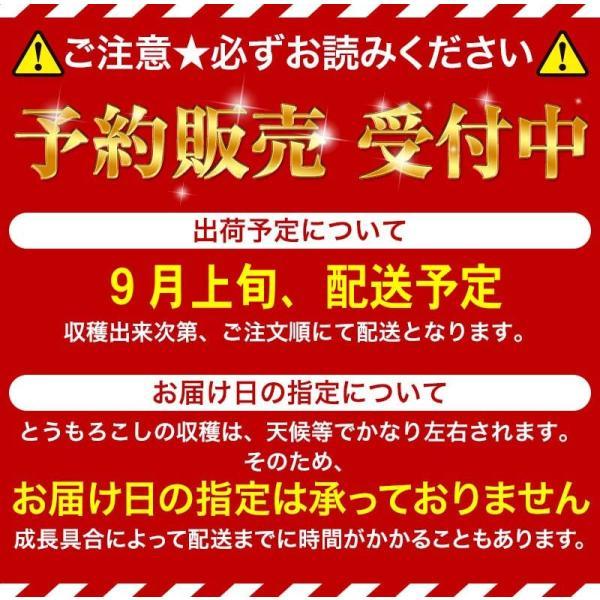 【訳あり】(送料無料)北海道産白いとうもろこし 旭山動物園白くまコーン 10〜13本入り(北海道スイートコーン) フルーツのような白いトウモロコシ|kanitaro|02