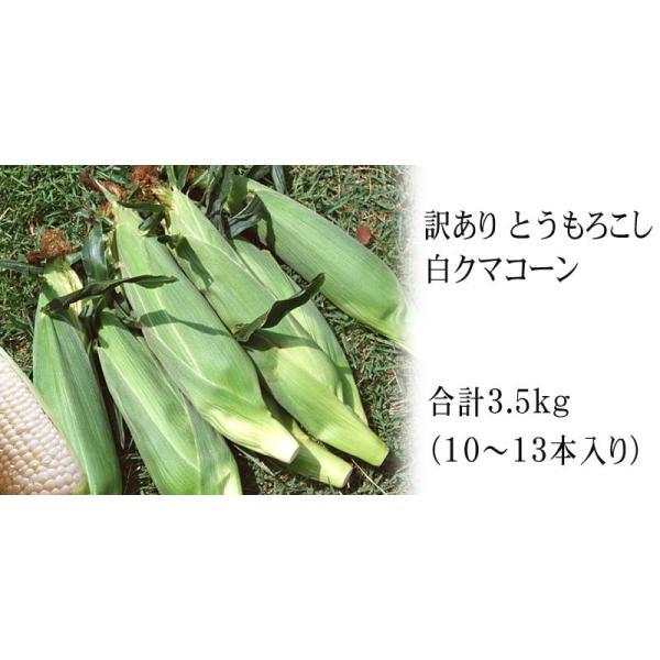 【訳あり】(送料無料)北海道産白いとうもろこし 旭山動物園白くまコーン 10〜13本入り(北海道スイートコーン) フルーツのような白いトウモロコシ|kanitaro|04