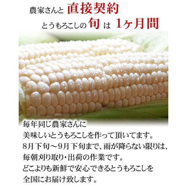 【訳あり】(送料無料)北海道産白いとうもろこし 旭山動物園白くまコーン 10〜13本入り(北海道スイートコーン) フルーツのような白いトウモロコシ|kanitaro|05