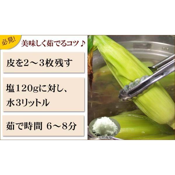 【訳あり】(送料無料)北海道産白いとうもろこし 旭山動物園白くまコーン 10〜13本入り(北海道スイートコーン) フルーツのような白いトウモロコシ|kanitaro|06