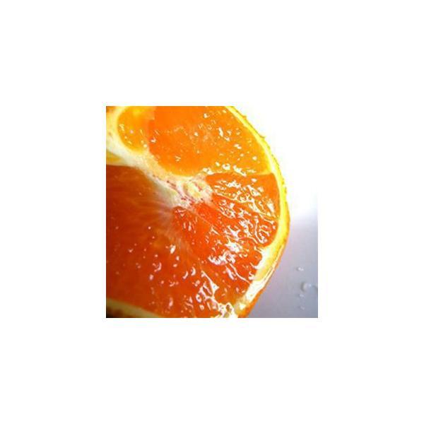 清見オレンジ4kg|kanjyukuya|02