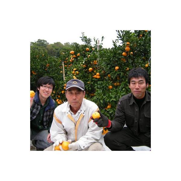 清見オレンジ4kg|kanjyukuya|04