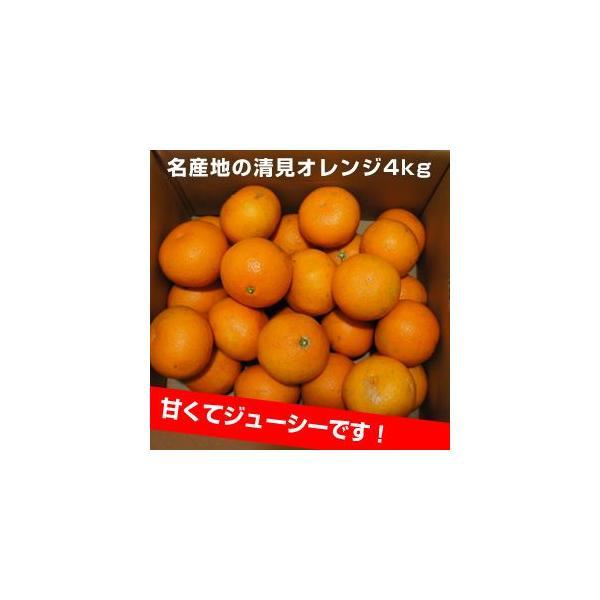 清見オレンジ4kg|kanjyukuya|06