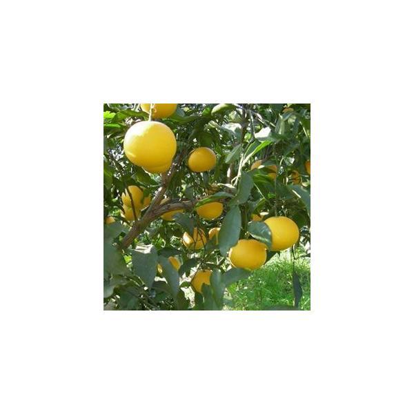 <特別割引中>柑橘ミックスジュース1000ml ×12本<愛媛直送品> kanjyukuya 03