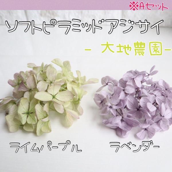 アジサイ 2種類セット プリザーブド加工 ハーバリウム レジン キット ポイント 花材 あじさい お試し 封入 素材 買い足し 紫陽花 送料無料