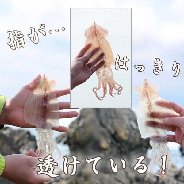 透き通る美しさの絶品スルメ(10枚)|karakaraboshi|02