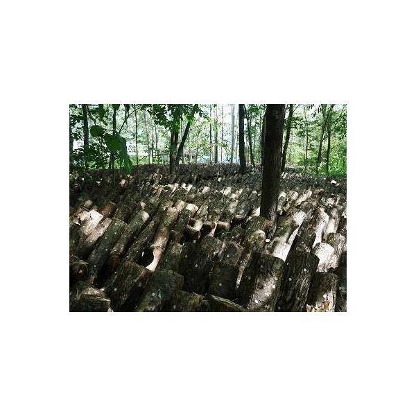 露地栽培 完全無農薬 こだわりの原木椎茸 特選Mサイズ 700g(19〜30枚入り) karus 05