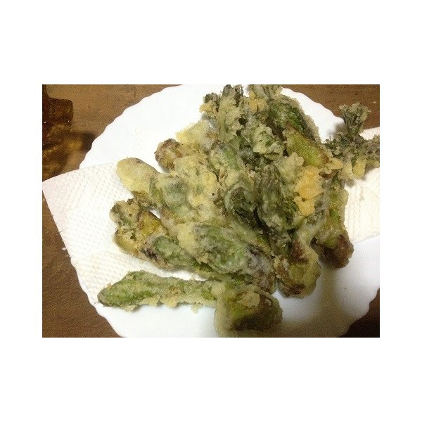 予約開始!山ウド 500g 北海道山菜 とかち産 天然 朝採り    |karus|04