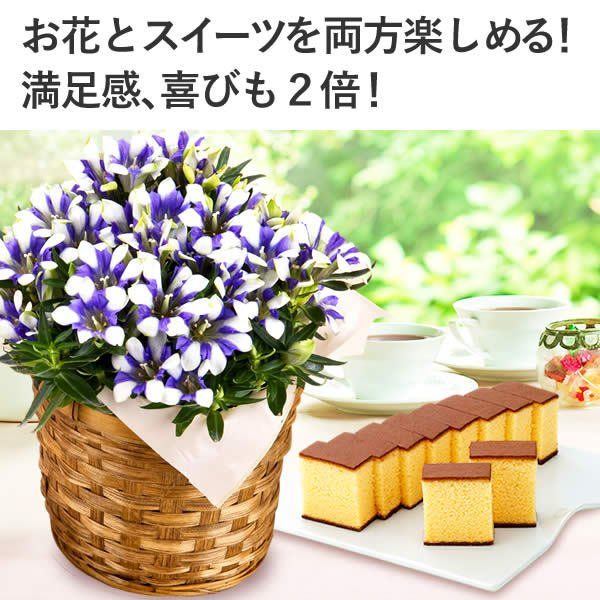 母の日 (花 カーネーション ハーバリウム 鉢植え プレゼント ギフト カステラ 2019) 花とスイーツ MD12 kasutera1ban 03