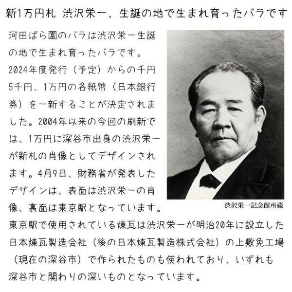 花 誕生日プレゼント 女性 男性 母 父 バラ フラワーアレンジメント 送別会 退職祝い 結婚記念日 送料無料 20代 30代 40代 50代 60代 70代 80代 90代|kawata-baraen|17