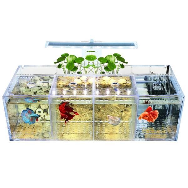 隔離用品水槽ベタフィッシュタンクグッピー繁殖孵化分離ボックスアクリルシリンダーデスクトップインキュベーター魚