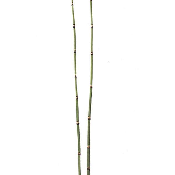人工観葉植物・トクサ・S・全長76cm・6本セット(... - 人工観葉植物と造花の通販ケイシン