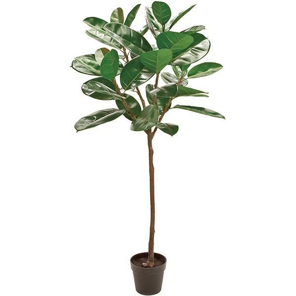 木 ゴム の ゴムの木の育て方