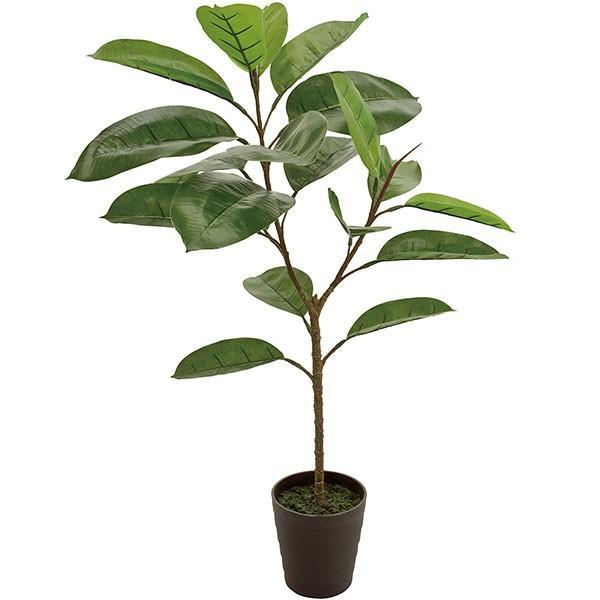 木 ゴム の ゴムの木の育て方で気をつけるべきポイント